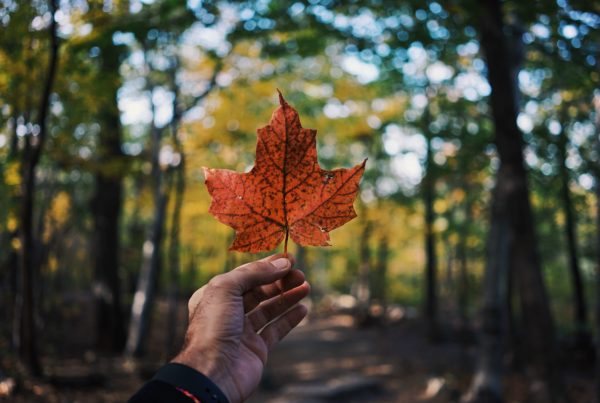 Study in Canada Fall 2021 | COVID